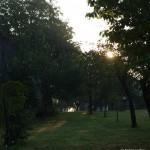 Morgens im Garten....